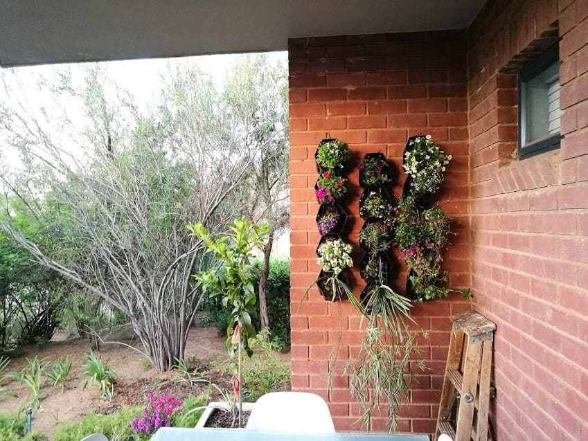 Wall garden in Johannesburg